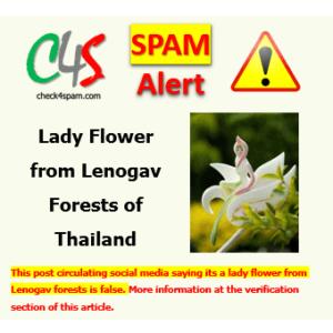 lady flower lenogav forests thailand hoax