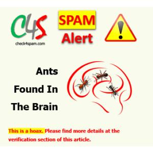 ants found brain spam